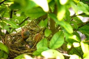 bird\'s nest with chicks in a tree