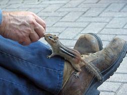 chipmunk on the foot