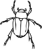 drawing of a japanese beetle on a white background