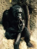 young sitting gorilla in Zoo