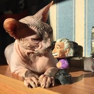 cat Sphinx and statue of Einstein