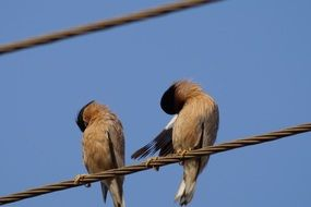 the birds are sitting on a wire