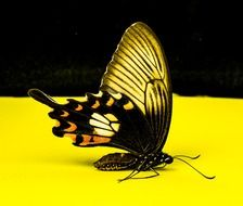 butterfly on the yellow surface