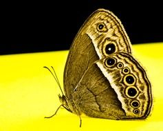 filigreed butterfly on the yellow surface