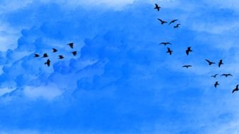 flocks of birds in the blue sky