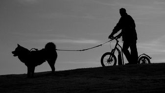 cyclist with a dog
