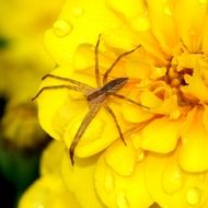 Small Spider on Arachnid