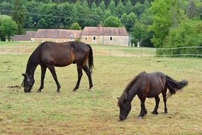 two dark brown horses on a farm