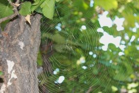 spider web on a tree