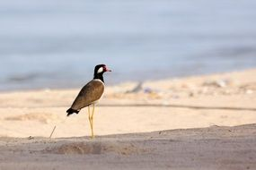 bird on high legs on the beach