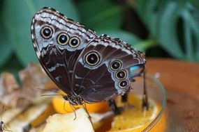 Butterfly sitting on orange slices in a glass