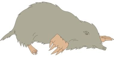 drawing of a grey mole