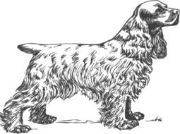 drawn spaniel on a book page