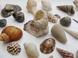 various shells on the table
