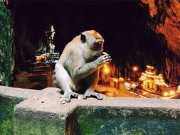 monkey sitting on the city wall