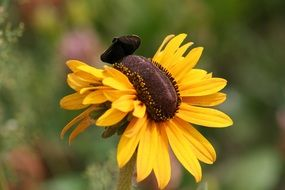 butterfly on a yellow daisy