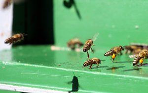 many bees on a green hive close-up