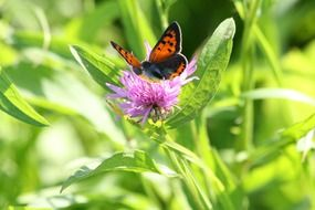 butterfly on a pink flower with green leaves