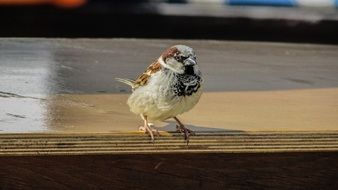 Sparrow Visitor Bird