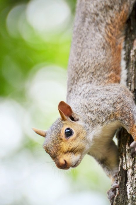 hanging upside down squirrel