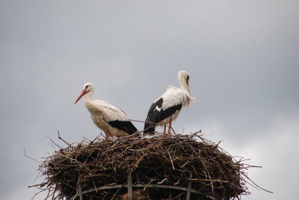 Nest of the storks