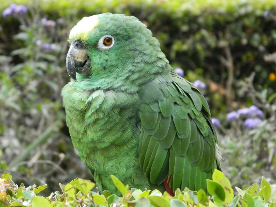 green Parrot at greenery