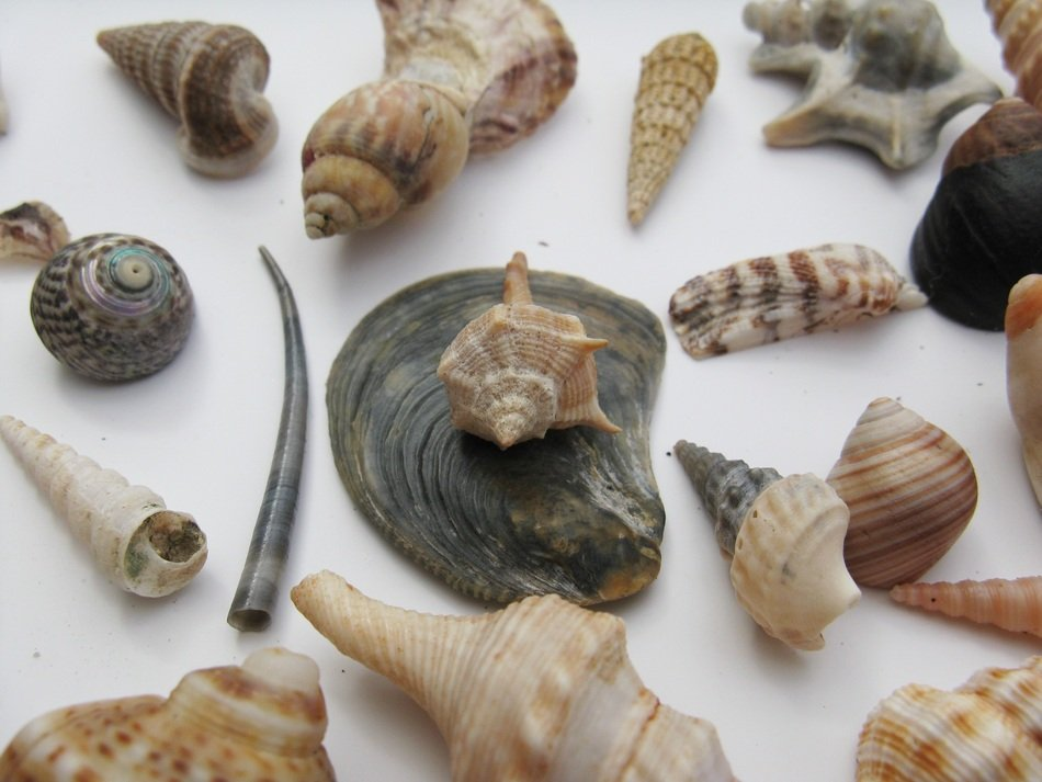 different shells on a white plate