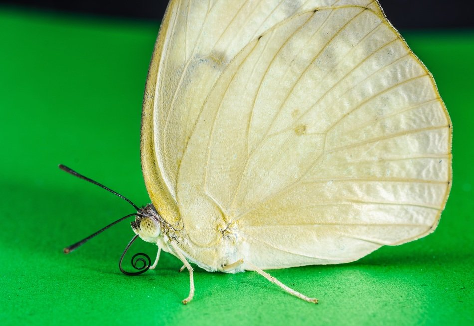 white butterfly on green surface