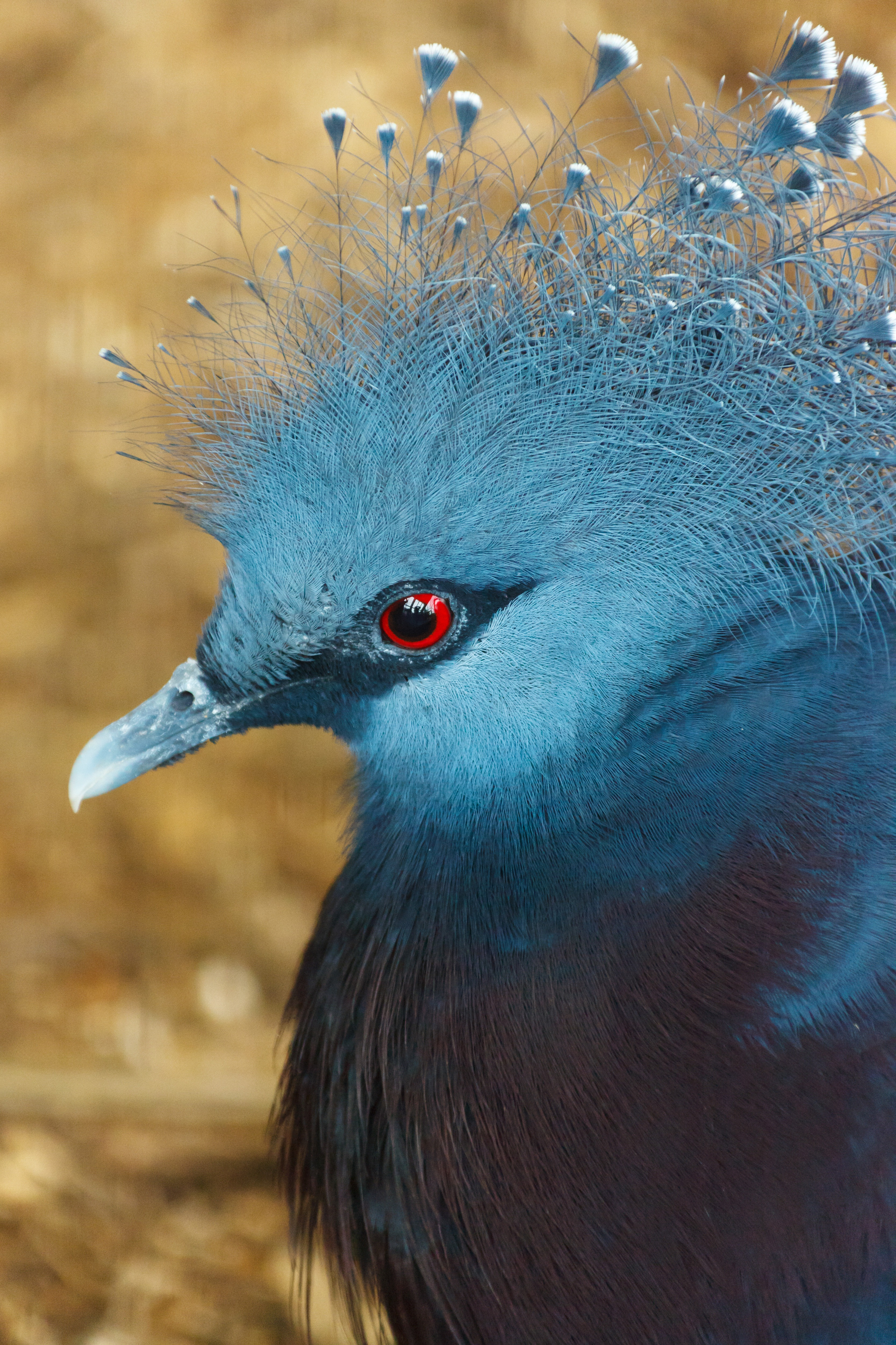Profile portrait of a blue exotic bird free image download