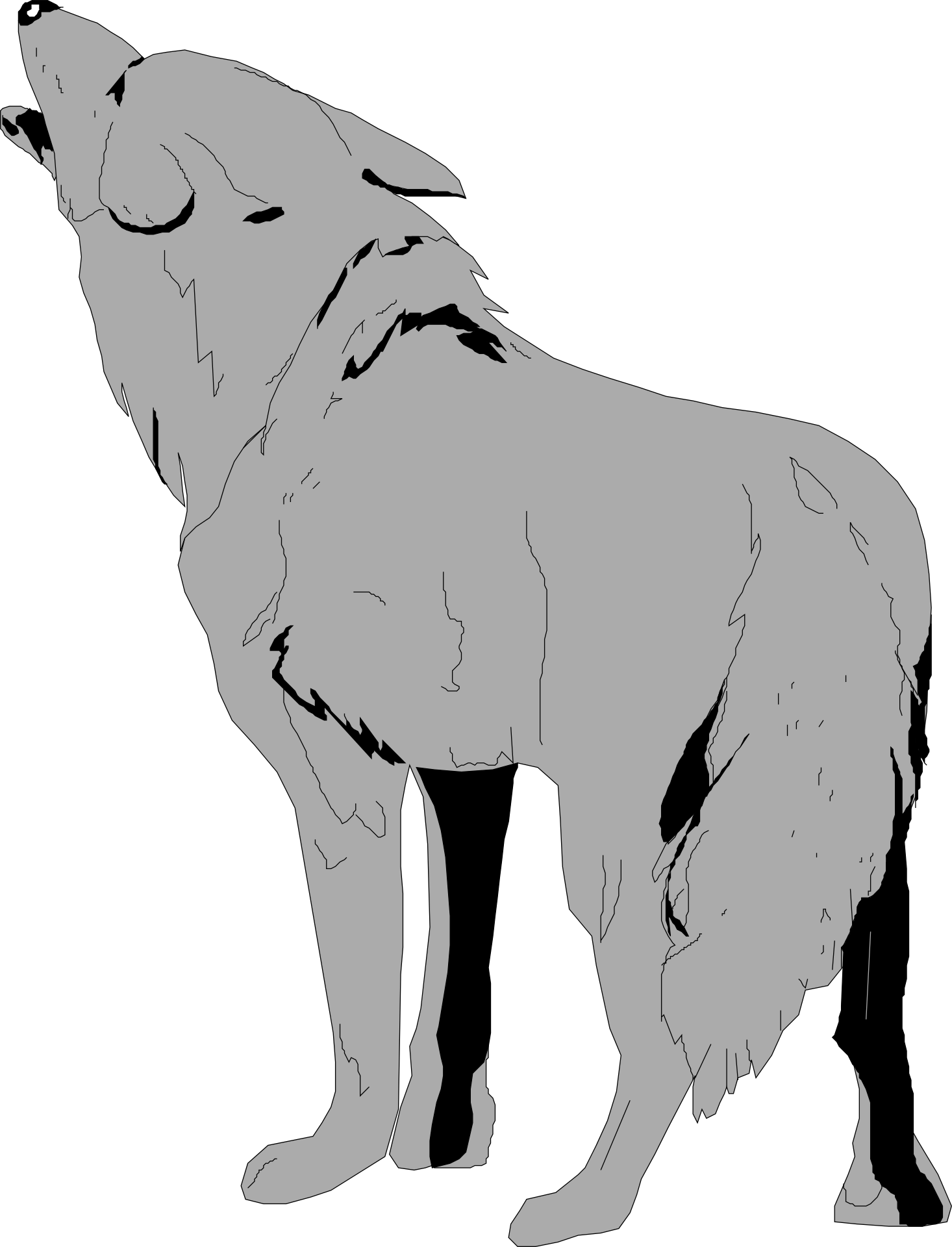 Grey Wolf Howling Drawing Free Image