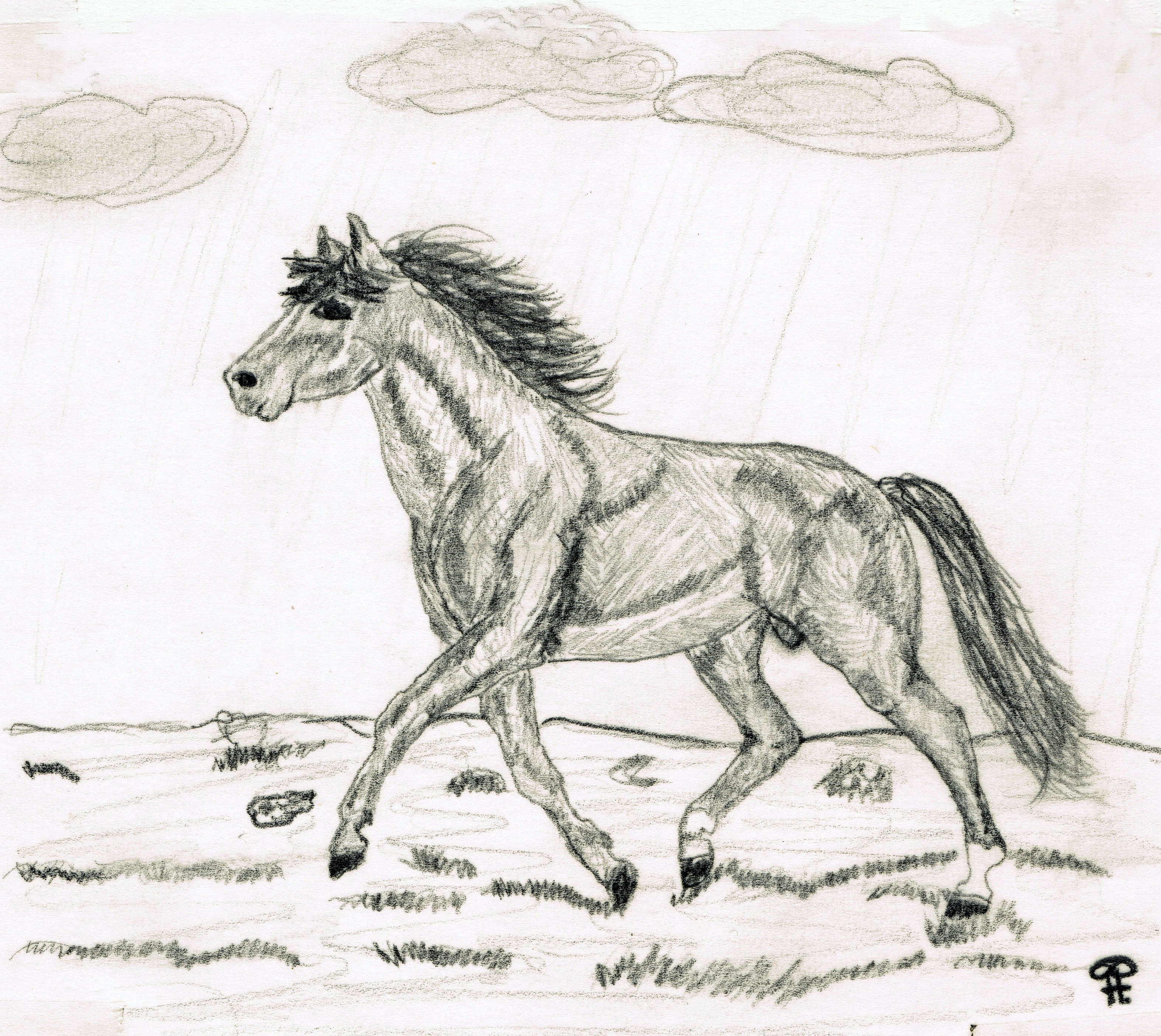 Drawing A Running Horse Across A Meadow Free Image
