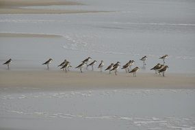 birds on the shore of the arabian sea