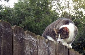 Fence Cat