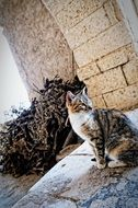 cat in the monastery