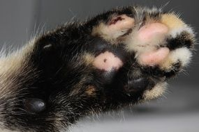 small Cat Paw