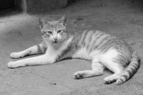 black and white photo of a young cat