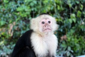 portrait of a monkey among the jungle