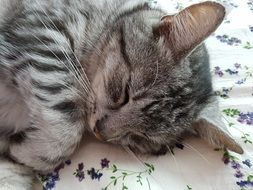 beautiful tabby cat is sleeping on the bed
