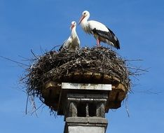 stork couple on nest at blue sky