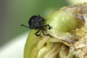 Macro photo of the black beetle