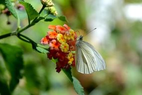beautiful and cute white Butterfly