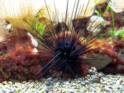Sea Urchins Gift Sting Toxic