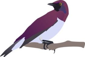 Purple Bird on branch, drawing