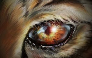 yellow eye of a tiger close up