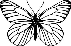 black and white drawing of a butterfly on a white background