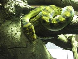 green exotic snake in the terrarium
