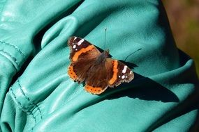 brown butterfly on turquoise fabric