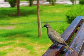 sitting little bird on a bench in a park