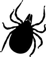 Tick, Sting Insect, black drawing