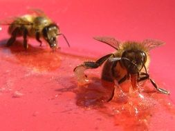 honey bees on a red surface